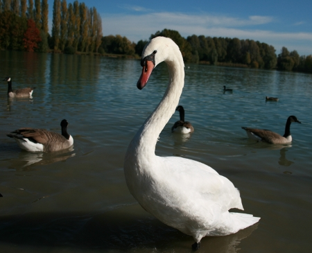 http://coldtroll.cowblog.fr/images/photos/Cygne.jpg